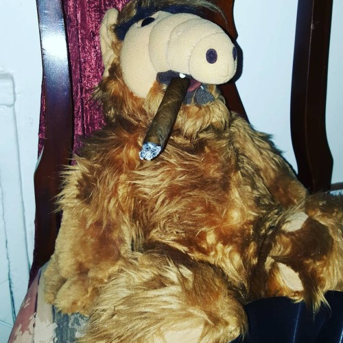 ALF! He just wont quit those damn cigars alf cigarshellip